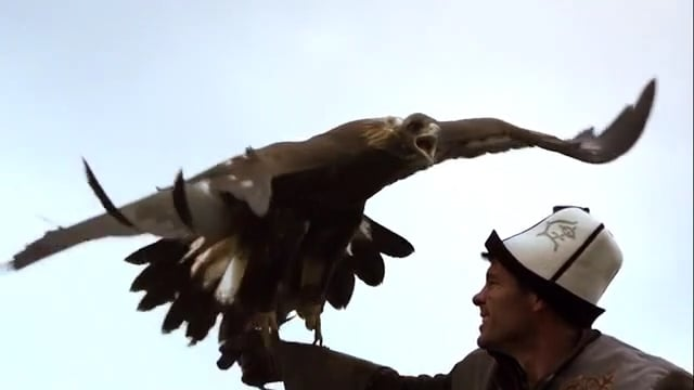 WORLD of FALCONRY